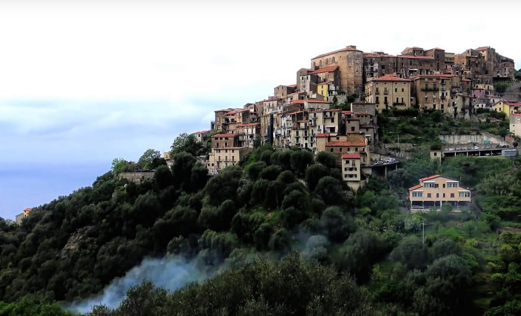 PISCIOTTA: la patria dell'ulivo pisciottano – video