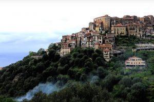 PISCIOTTA: la patria dell'ulivo pisciottano – video