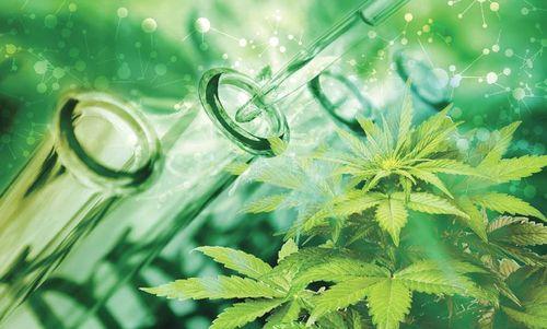La Cassazione ha deciso che vendita e uso di cannabis light sono leciti
