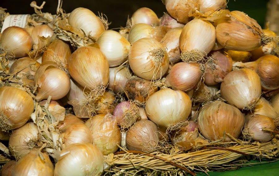 cipolla - A Vatolla, annullata la festa della cipolla, apre il punto vendita