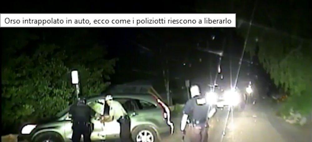 Orso intrappolato in auto, ecco come i poliziotti riescono a liberarlo – video