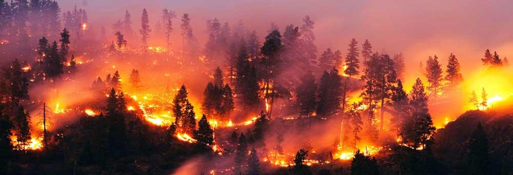 incendio - Polla, siglata convenzione con la Guardia Nazionale Ambientale contro gli incendi