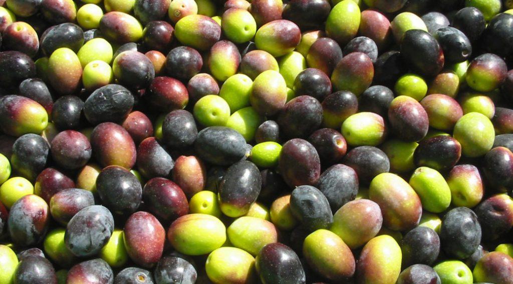 Il cioccolato all'olio d'oliva che fa bene ai diabetici