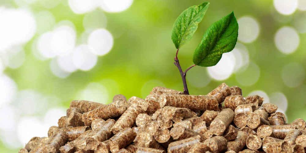 A Castellabate sara' installato un impianto a biomassa vegetale