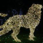 DSC01645 150x150 - Luci d'artista a Salerno, le prime foto - IL VIDEO
