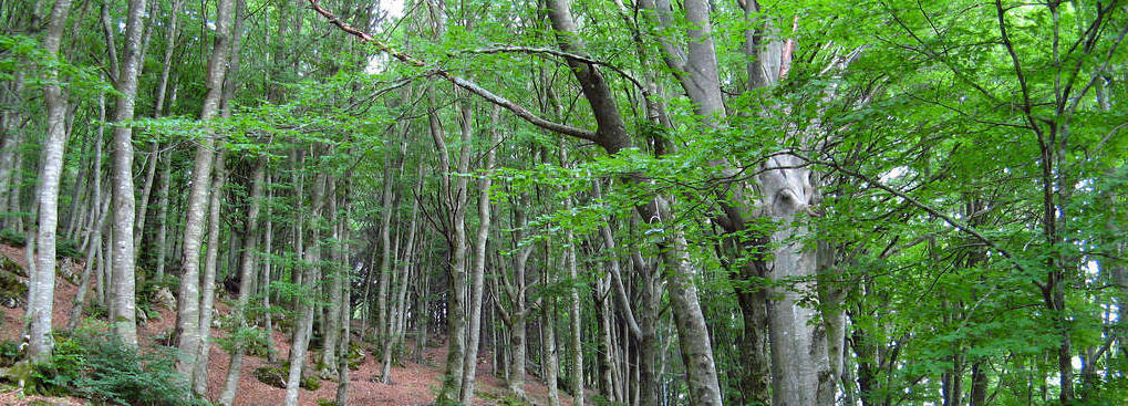 forestazione - Campania: 100 milioni di euro per la forestazione