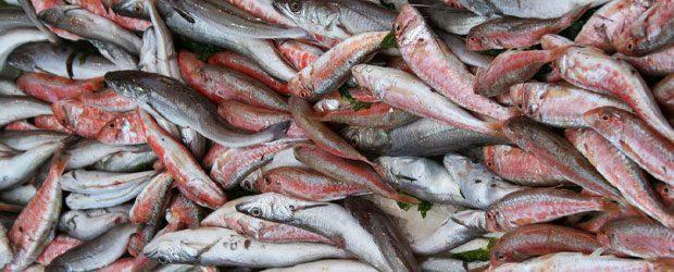 """la paranza - Campania, cena gratis per promuovere il pesce """"povero"""""""