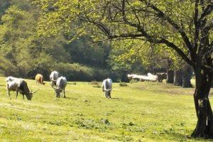 Eboli: convegno su distretti rurali e agroalimentari – 3 gennaio 2020