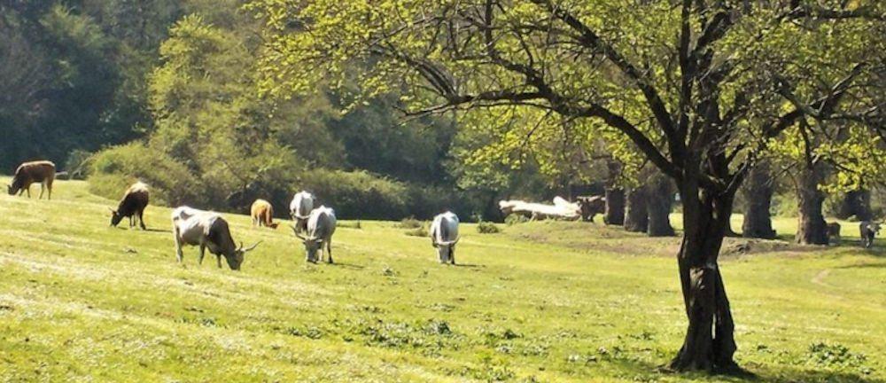 rurale - Eboli: convegno su distretti rurali e agroalimentari - 3 gennaio 2020