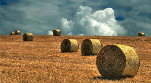 """Ascea, corso di """"Gestione manageriale dell'impresa agricola"""""""