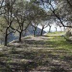 DSC 0043 150x150 - San Cipriano Picentino, il Castello di Montevetrano - Video e foto