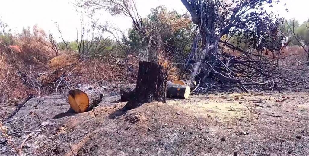 Emergenza incendi nel salernitano: agricoltori pronti ad aiutare i comuni