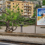 1 150x150 - Tromba d'aria a Salerno, sdradicati grossi alberi, auto coinvolte - le foto ED IL VIDEO