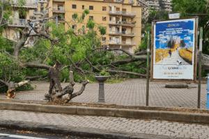 Tromba d'aria a Salerno, sdradicati grossi alberi, auto coinvolte – le foto ED IL VIDEO