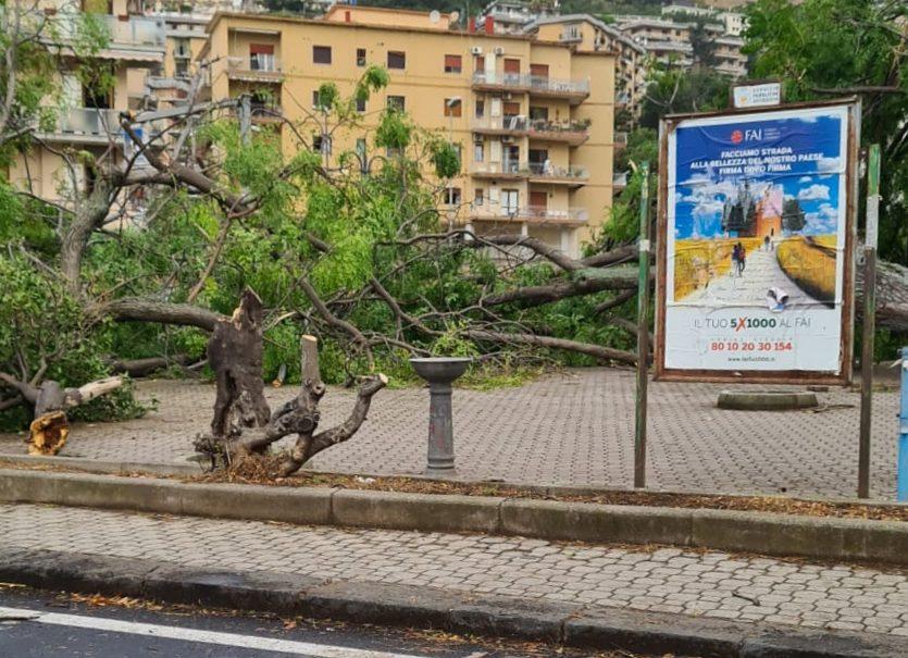 1 - Tromba d'aria a Salerno, sdradicati grossi alberi, auto coinvolte - le foto ED IL VIDEO