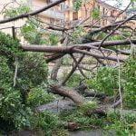 10 150x150 - Tromba d'aria a Salerno, sdradicati grossi alberi, auto coinvolte - le foto ED IL VIDEO