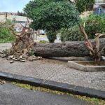 11 150x150 - Tromba d'aria a Salerno, sdradicati grossi alberi, auto coinvolte - le foto ED IL VIDEO
