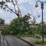 12 150x150 - Tromba d'aria a Salerno, sdradicati grossi alberi, auto coinvolte - le foto ED IL VIDEO