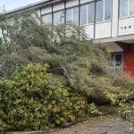 21 150x150 - Tromba d'aria a Salerno, sdradicati grossi alberi, auto coinvolte - le foto ED IL VIDEO