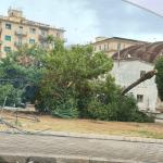 4 150x150 - Tromba d'aria a Salerno, sdradicati grossi alberi, auto coinvolte - le foto ED IL VIDEO