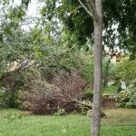 6 150x150 - Tromba d'aria a Salerno, sdradicati grossi alberi, auto coinvolte - le foto ED IL VIDEO