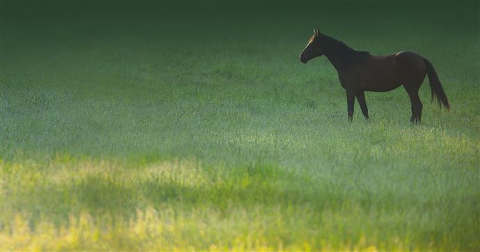 Sassano, denunciato per pascolo abusivo di cavalli