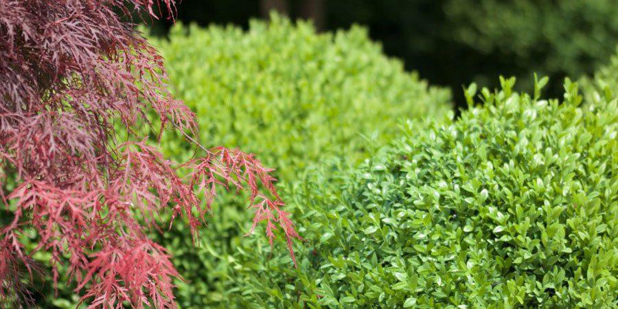 """verde pubblico piante 1 - Auletta: parte l'iniziativa """"Adotta uno spazio pubblico del tuo Comune"""""""