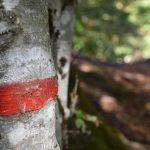DSC 0059 150x150 - Il puzzle della domenica e' dedicato all'autunno - puzzle + foto