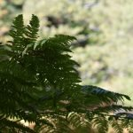 DSC 0065 150x150 - Il puzzle della domenica e' dedicato all'autunno - puzzle + foto