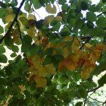 DSC 0067 150x150 - Il puzzle della domenica e' dedicato all'autunno - puzzle + foto
