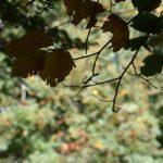 DSC 0068 150x150 - Il puzzle della domenica e' dedicato all'autunno - puzzle + foto