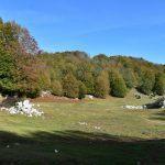 DSC 0099 150x150 - Il puzzle della domenica e' dedicato all'autunno - puzzle + foto