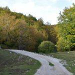 DSC 0101 150x150 - Il puzzle della domenica e' dedicato all'autunno - puzzle + foto