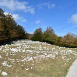 DSC 0104 150x150 - Il puzzle della domenica e' dedicato all'autunno - puzzle + foto