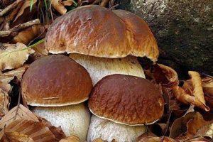 Campora, si perdono in montagna per cercare funghi: salvati dalla Forestale