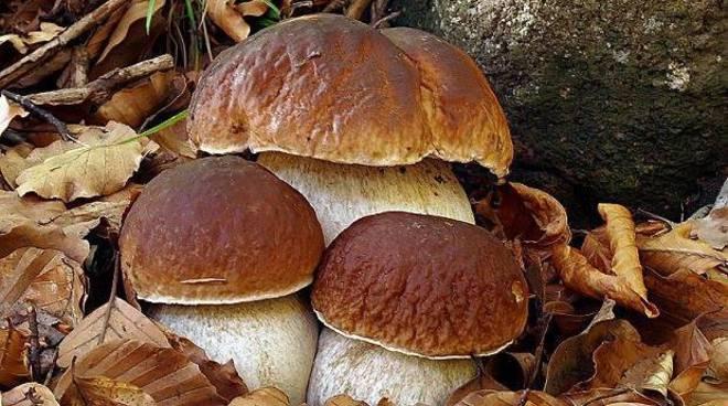alto 302965.660x368 - Campora, si perdono in montagna per cercare funghi: salvati dalla Forestale