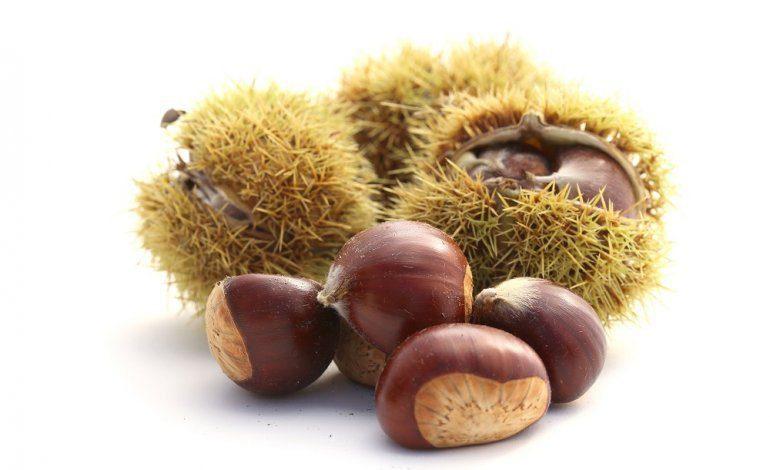 castagna 770x470 1 - La conversione del bosco in castagneto da frutto esonerata dalle compensazioni ambientali