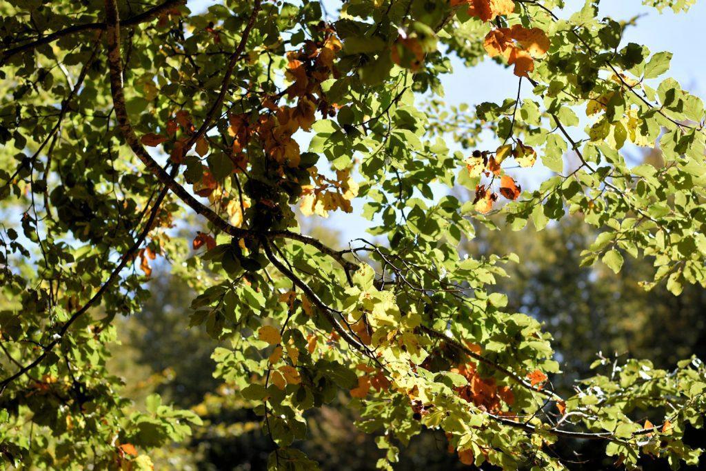 jigsaw 1024x683 - Il puzzle della domenica e' dedicato all'autunno - puzzle + foto