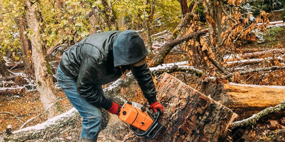 Perdifumo, taglio del bosco di proprietà comunale