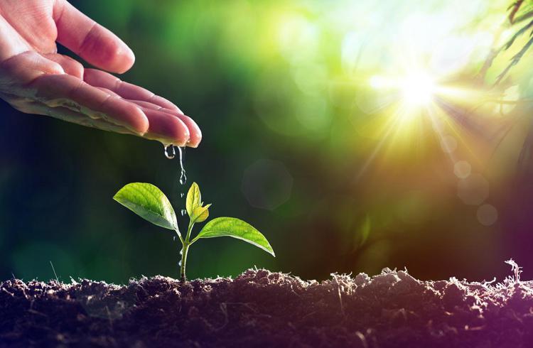 agricoltura pianta ftlia - Sostenibilità alimentare, per 7 italiani su 10 corrisponde al rispetto dell'ambiente