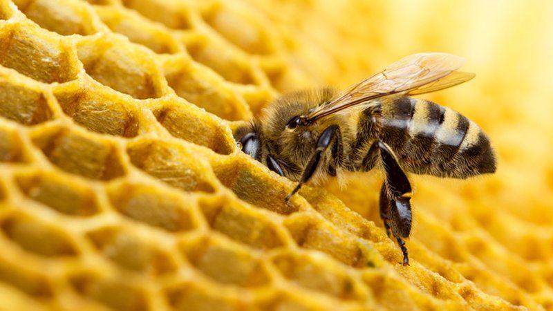 """Bellosguardo, incontro: """"Patologie delle api e buone pratiche apistiche: prevenire è meglio che curare"""" – 12 giugno"""