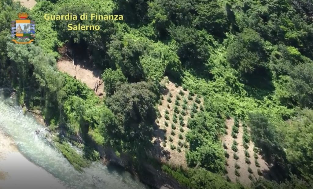 Foto 2 1 1024x620 - GdF, sequestrate due piantagioni nella piana del Sele