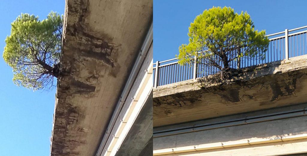 ilpino 1024x520 - Casalvelino, chiuso (per controlli) il ponte sull'Alento - il post poetico