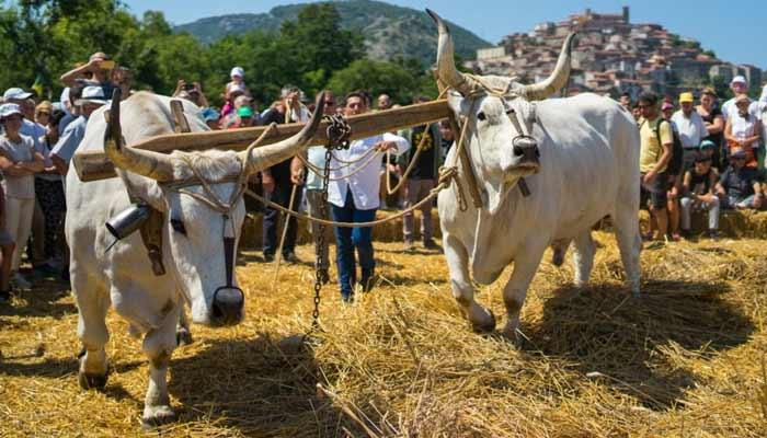 Palio del Grano campdigrano 2021 Caselle in Pittari Cilento - Caselle in Pittari, 17° Palio del Grano e Campdigrano - dal 12 al 18 Luglio 2021