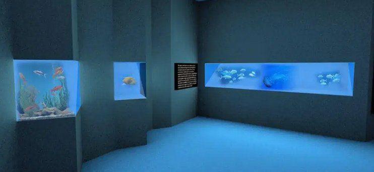 acquario - S. M. di Castellabate, inaugurazione del nuovo Acquario Virtuale - 22/7/21