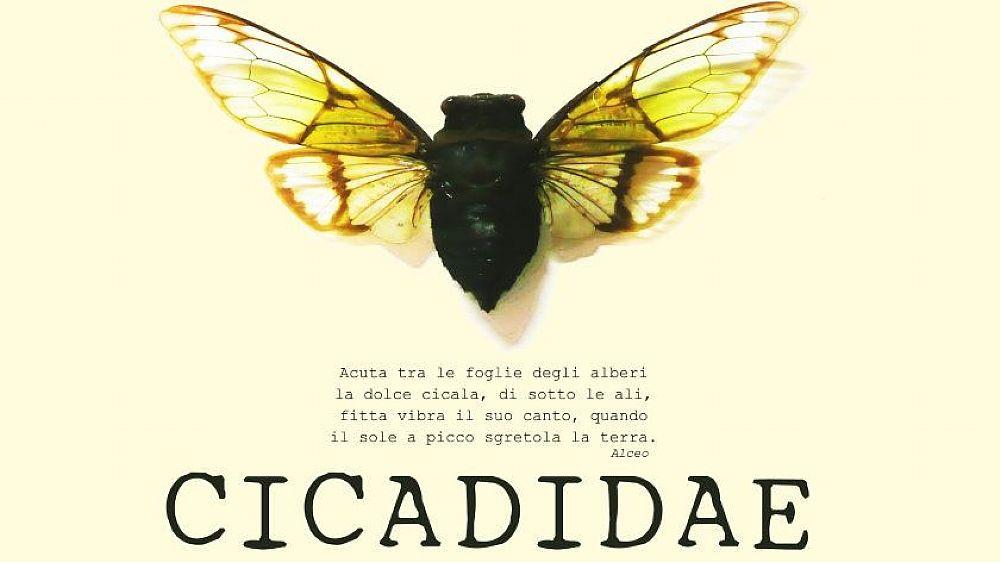 """24092021 cicadidae 03 - Roscigno Vecchia, """"CICADIDAE"""": laboratorio di teatrodanza - 2 e 3/10/21"""